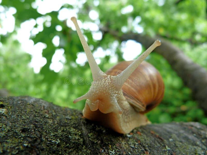 Macro de um caracol em uma planta fotos de stock