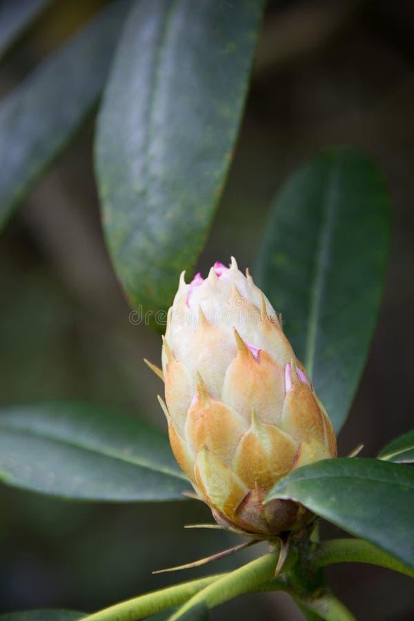 Macro de uma flor da árvore foto de stock