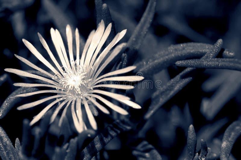 Macro de uma flor pequena na conversão artística fotos de stock