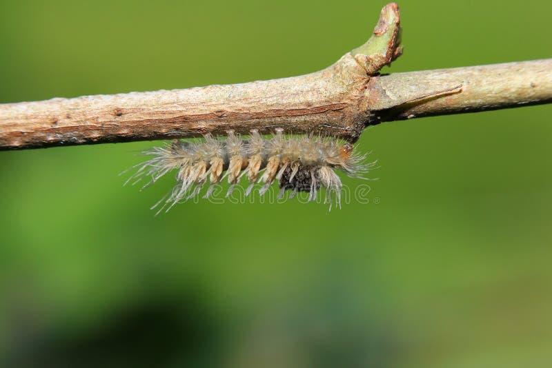 Macro de un insecto foto de archivo libre de regalías