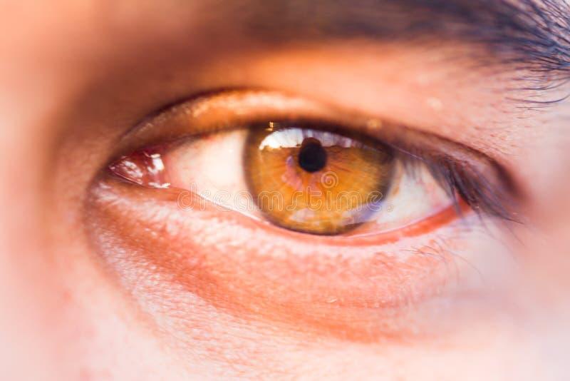 Macro de un ojo humano fotografía de archivo libre de regalías