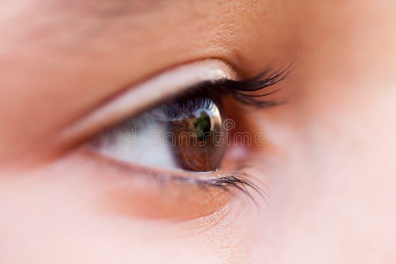 Macro de un ojo humano fotos de archivo libres de regalías