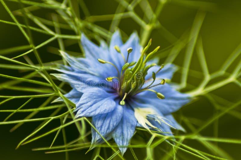 Macro de una flor imagen de archivo
