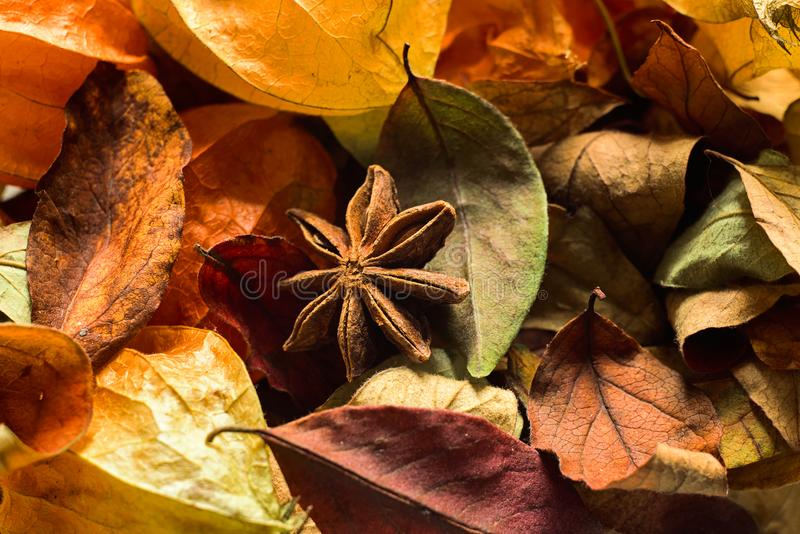 Macro de verum d'Illicium dans des feuilles photo stock