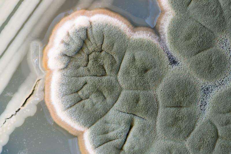 Macro dei funghi fotografie stock libere da diritti