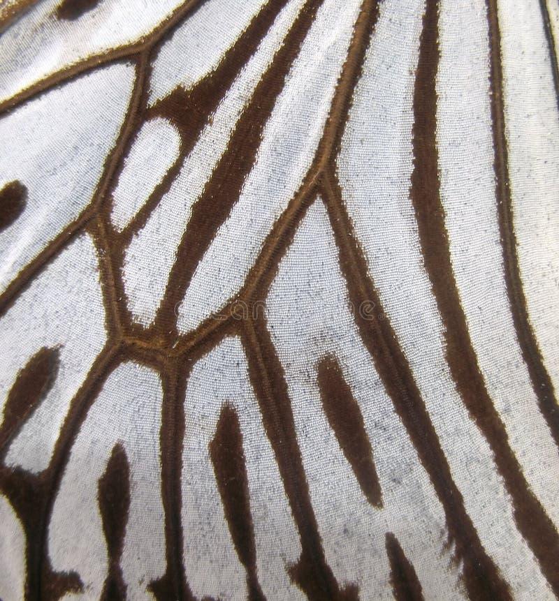 Macro del ala de la mariposa fotografía de archivo libre de regalías