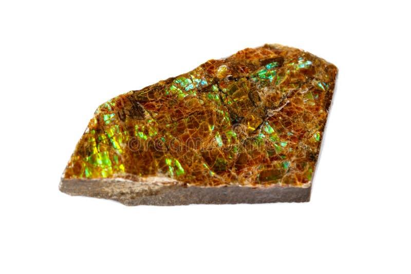 Macro del ammolite di pietra minerale su fondo bianco fotografia stock