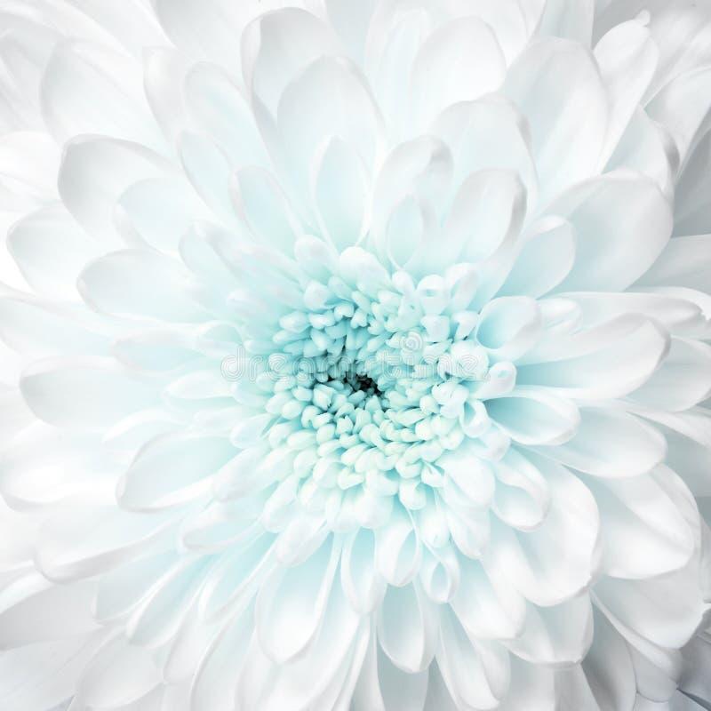 Macro del aster de la flor blanca imagenes de archivo