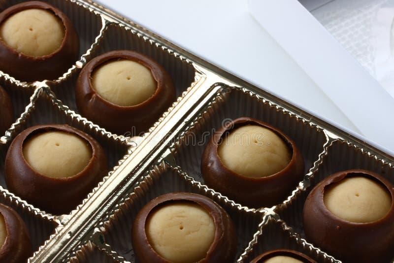 Macro del caramelo del castaño de Indias fotos de archivo