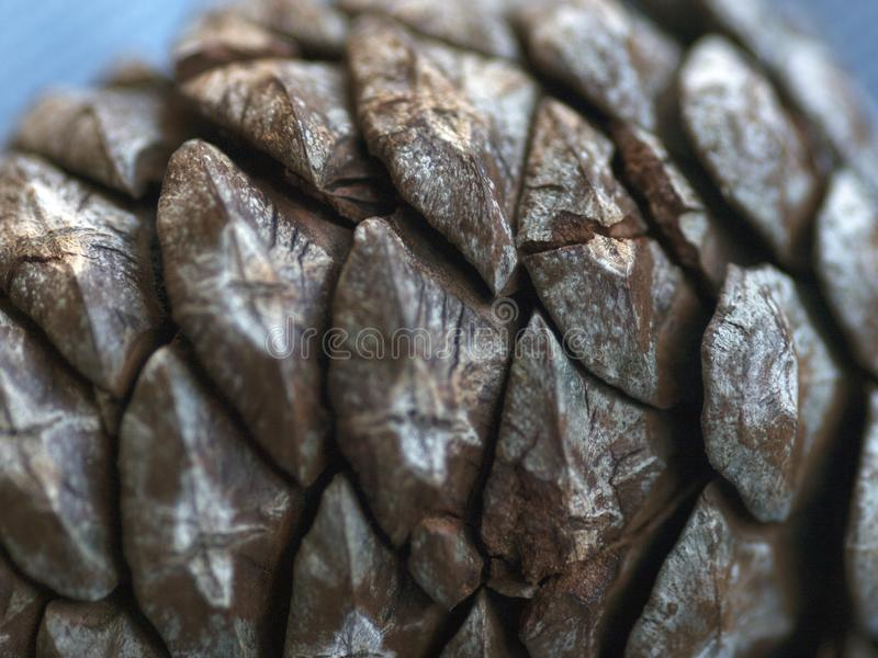 Macro del cono del pino fotografía de archivo