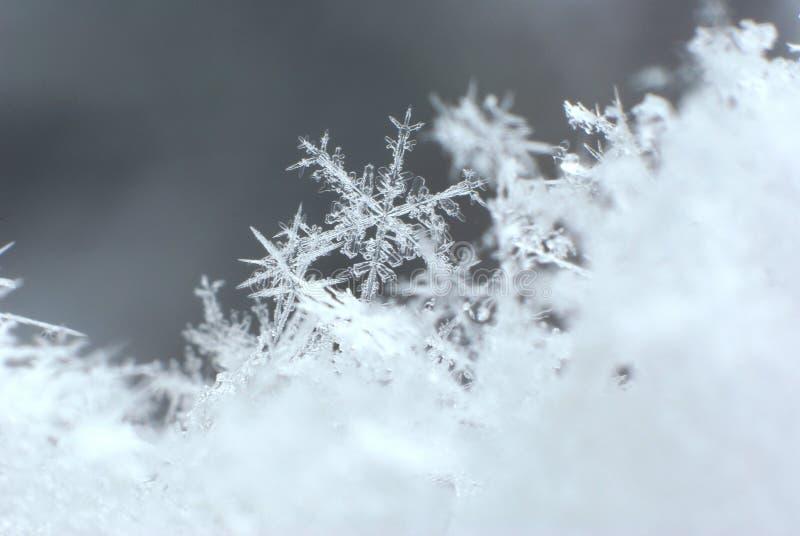 Macro 1 del fiocco di neve della montagna fotografie stock libere da diritti