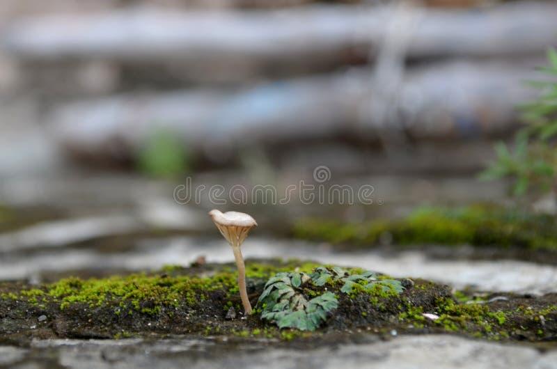 Macro del fungo fotografia stock
