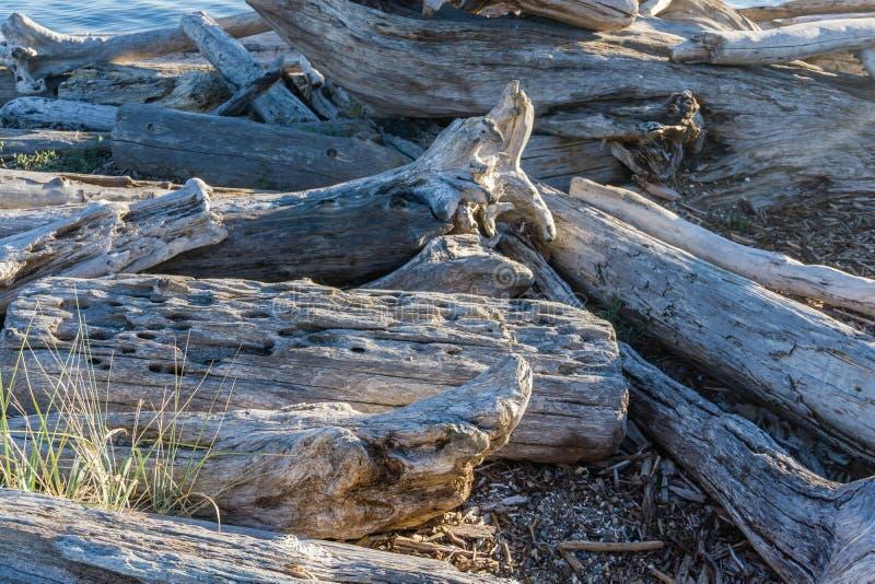 Macro del legname galleggiante della linea costiera immagine stock libera da diritti
