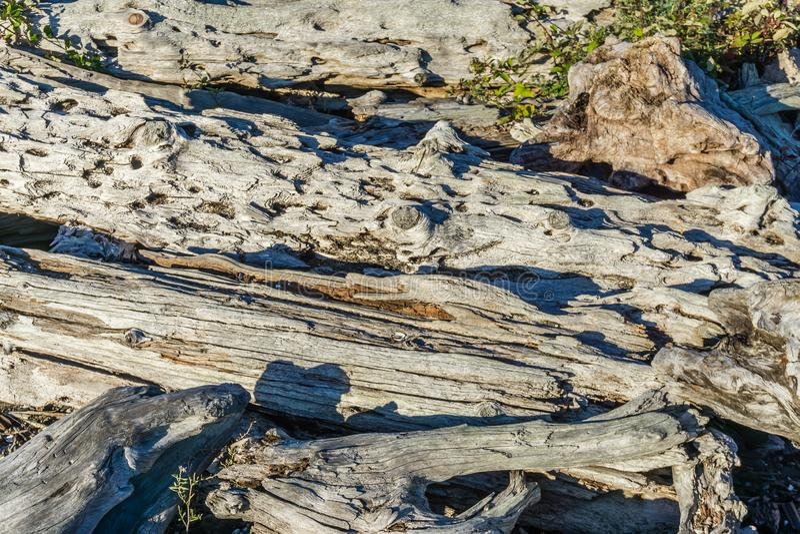 Macro 3 del legname galleggiante della linea costiera fotografia stock