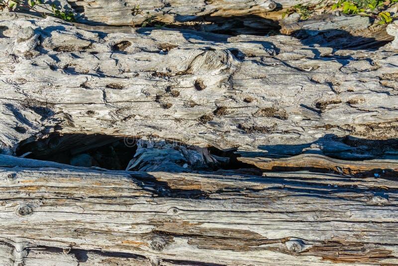 Macro 4 del legname galleggiante della linea costiera immagini stock