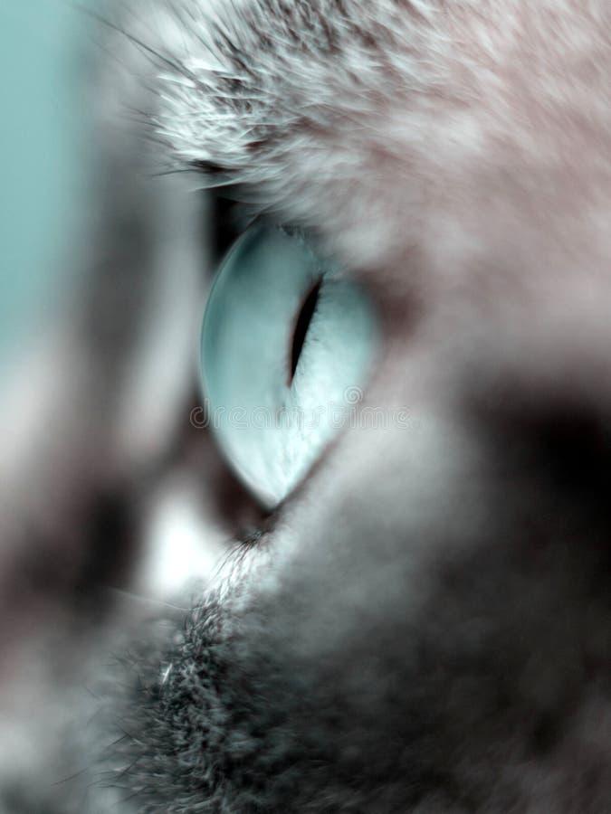 Macro del ojo de gato imágenes de archivo libres de regalías