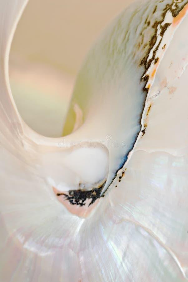 Macro del particolare del Nautilus fotografie stock