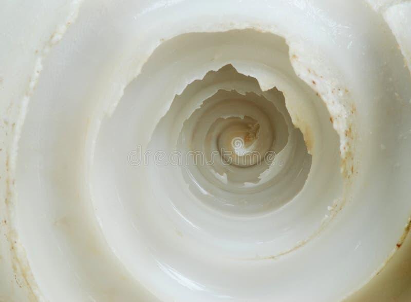 Macro del shell imagen de archivo libre de regalías