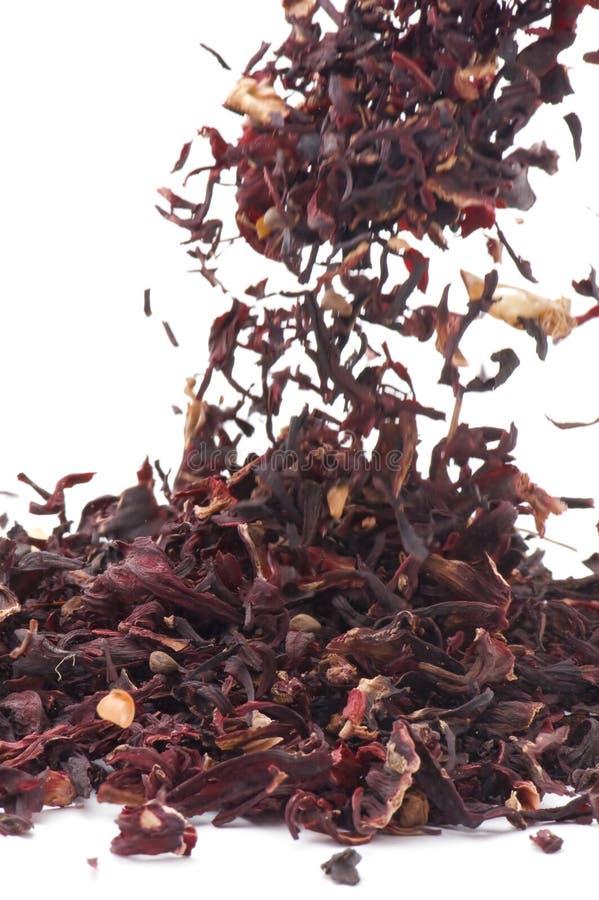 Macro del tè dell'ibisco immagine stock libera da diritti