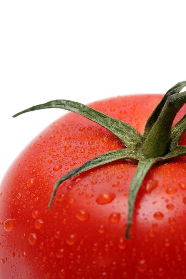 Macro del tomate fotografía de archivo libre de regalías