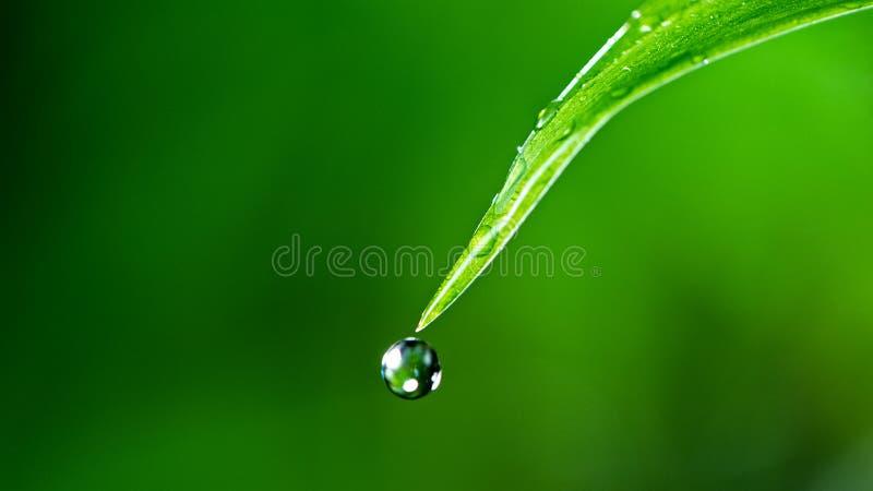 Macro dell'acqua che cade sulla foglia verde d'erba. immagini stock