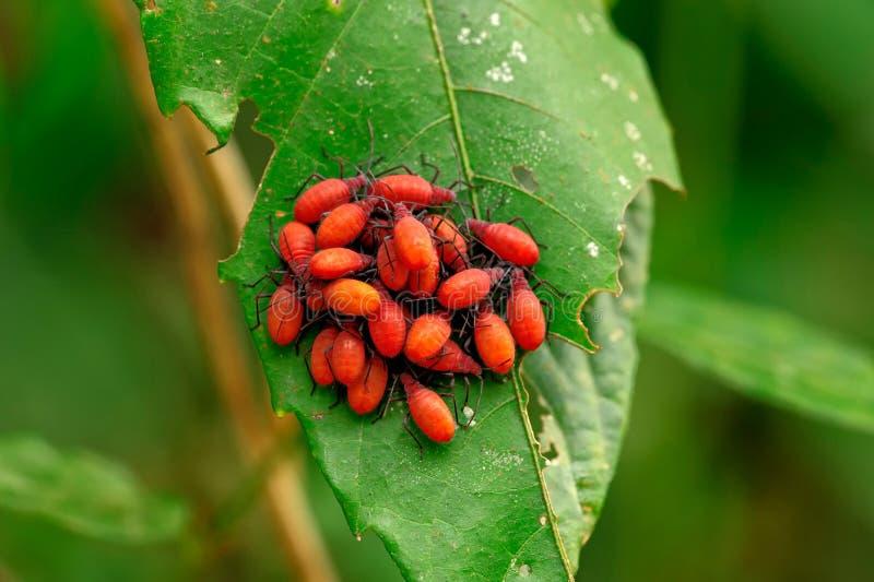 Macro dell'insetto, Laos fotografia stock
