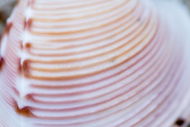 Macro della conchiglia fotografia stock