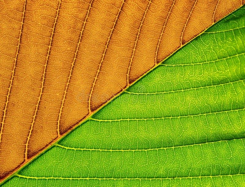 Macro della foglia verde. fotografia stock libera da diritti