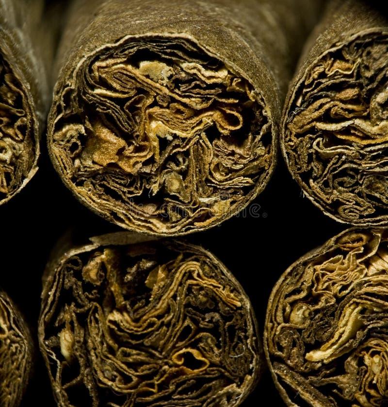 Macro des cigarettes ou du cigarillo sèches brunes comme concept de dépendance photographie stock libre de droits