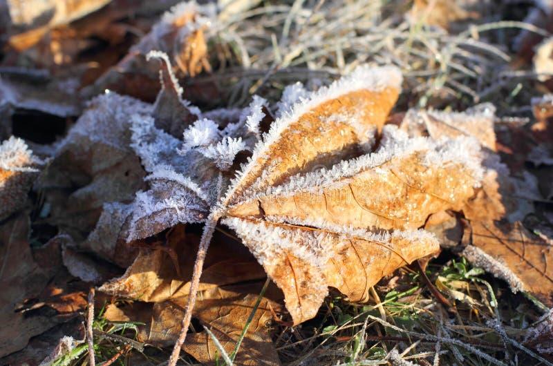 Macro des feuilles givrées en hiver image stock