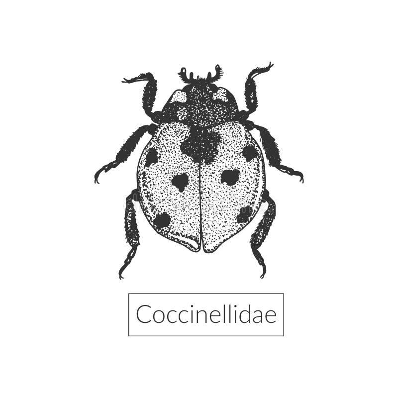 Macro dessin fortement détaillé de coccinelle illustration stock