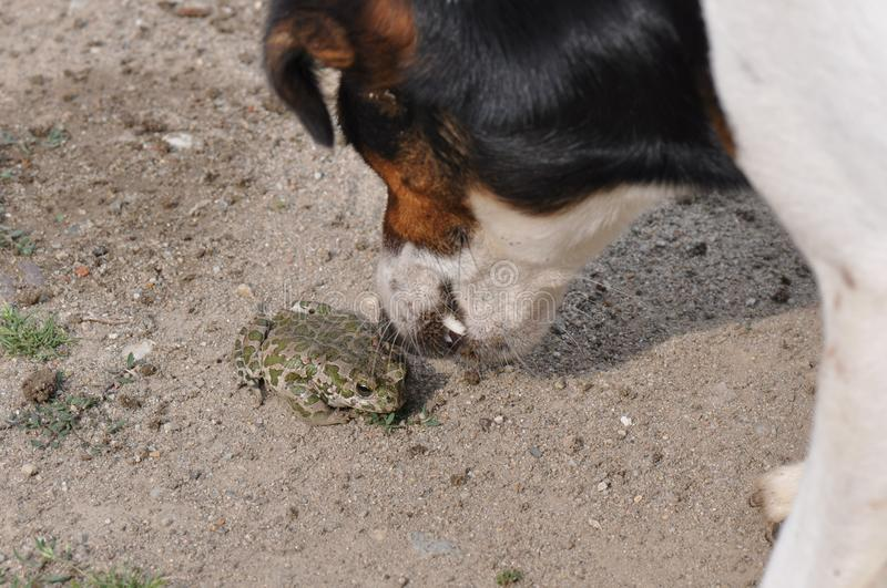 Frog and dog stock photos