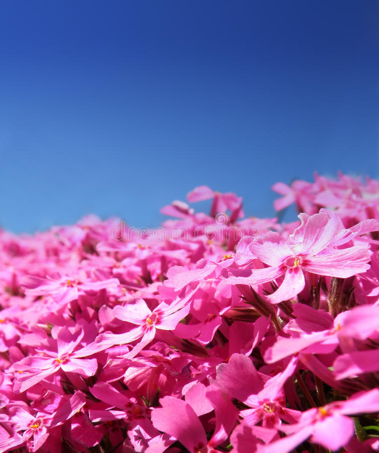 Download Macro Detail Of Purple Flowers Stock Image - Image: 19419573