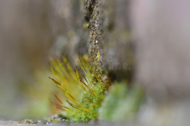 Moss detail royalty free stock photos