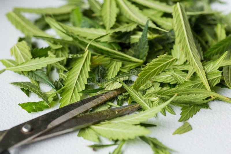 Macro dichte omhooggaand van bladeren van een Cannabis de Medische Marihuana royalty-vrije stock foto