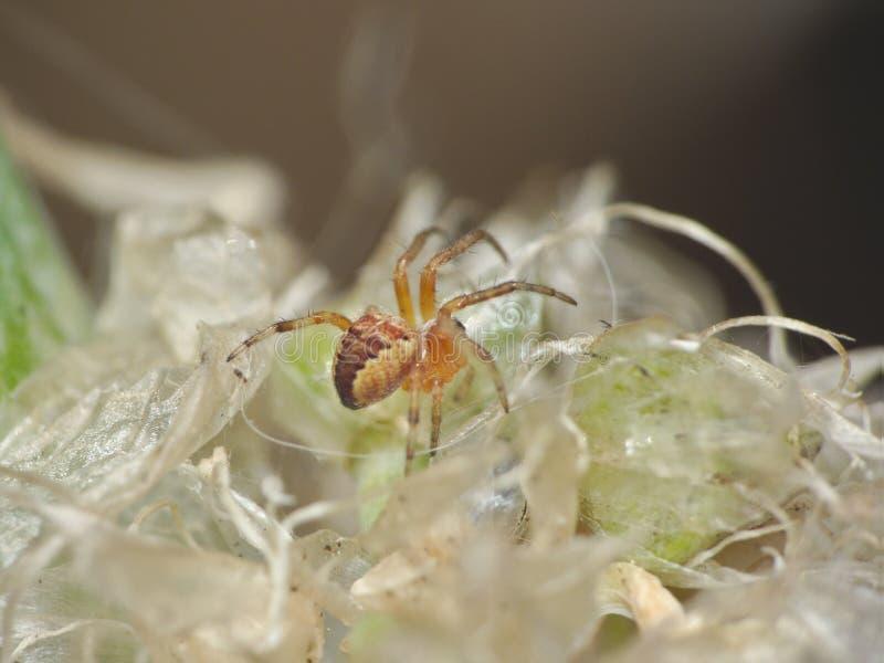 Macro dichte omhooggaand van een spin int. dat tuiniert hij, foto in het UK wordt genomen stock foto's