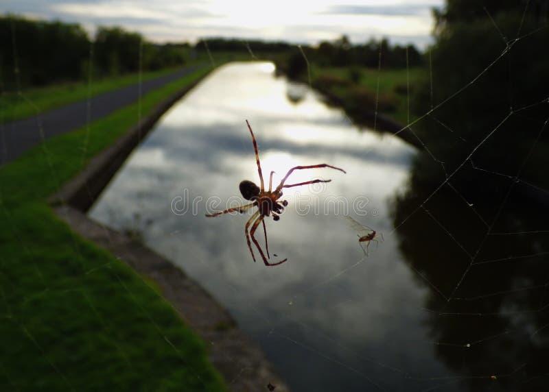 Macro dichte omhooggaand van een spin int. dat tuiniert hij, foto in het UK wordt genomen stock foto