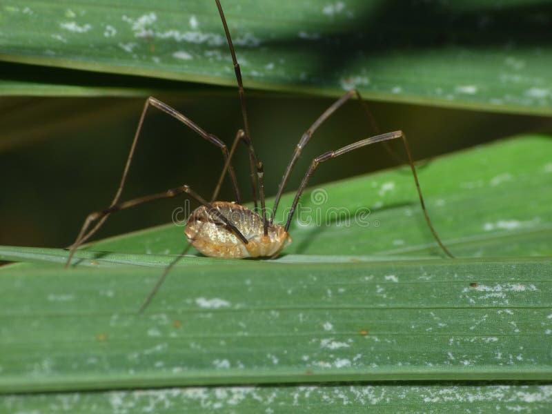 Macro dichte omhooggaand van een spin int. dat tuiniert hij, foto in het UK wordt genomen royalty-vrije stock foto