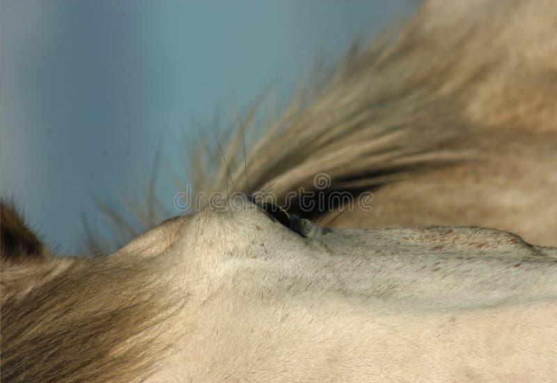 Macro do cavalo imagens de stock