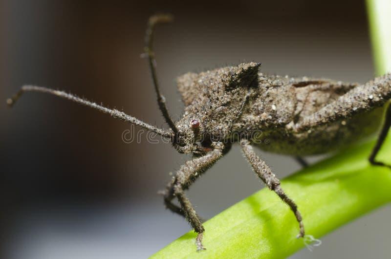 Download Macro do inseto foto de stock. Imagem de áspero, cabelo - 26518922