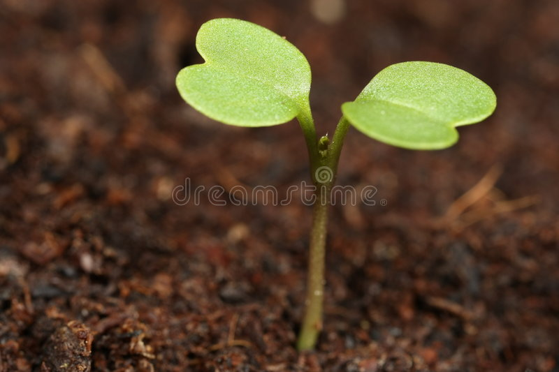 Macro do Seedling fotografia de stock