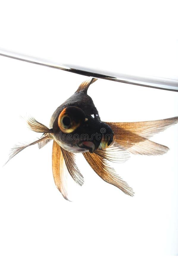 Macro dos peixes fotos de stock