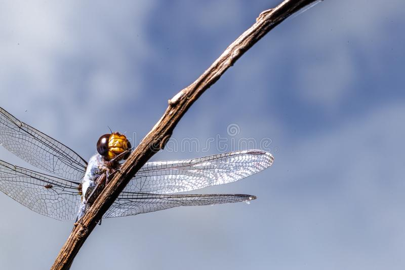 Macro dragonfly in the park and blur background.. Macro dragonfly in the park stock photo