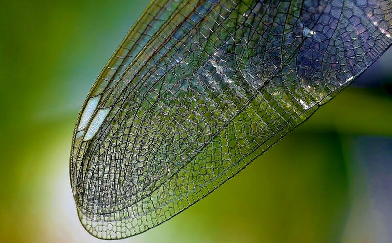 Macro Of Dragonfly Wing Free Public Domain Cc0 Image