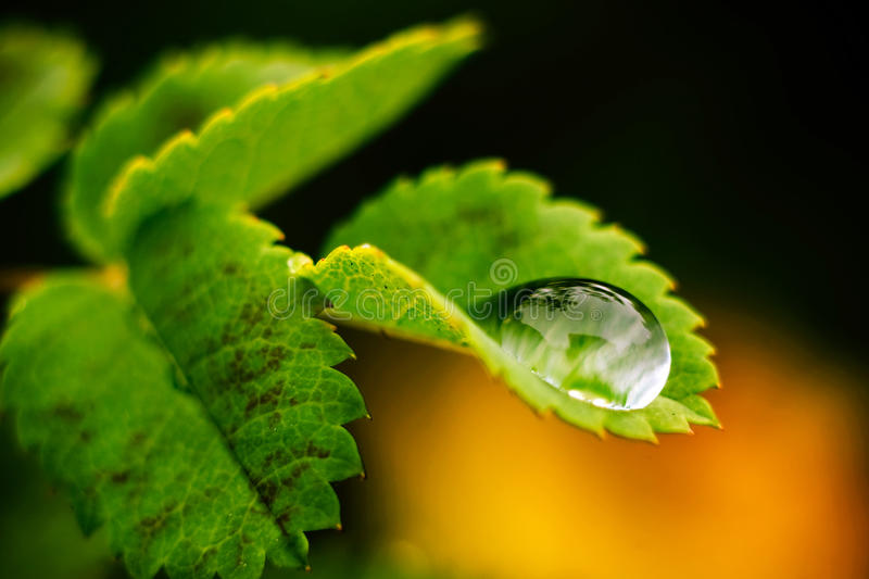 Macro drop of water. Macro photography. Green leaf with a big water drop royalty free stock photo
