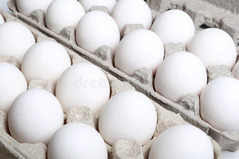 Macro eggs