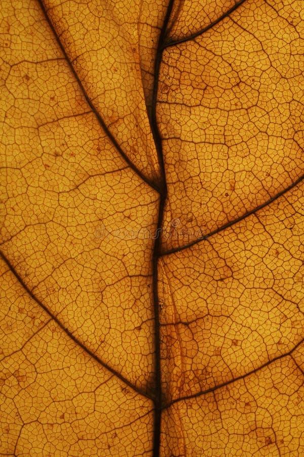 Macro en la hoja del otoño fotografía de archivo libre de regalías
