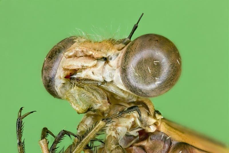 Macro extremo da lagarta verde fotos de stock