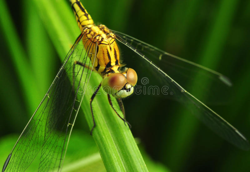 Macro eye of an insect royalty free stock images