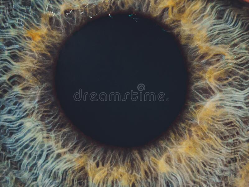 Macro of the eye of a man. Shallow depth of field. Macro of the eye of a man. Shallow depth of field royalty free stock photography
